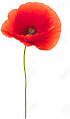 Lest we forget fallen comrades